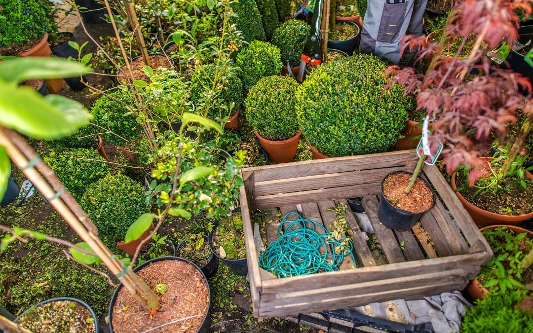Rent a Dumpster for Landscaping Projects in San Jose